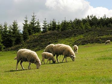 Βοσκοτόπια και άδεια κτηνοτροφικής μονάδας