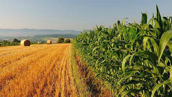 Περίοδος συγκομιδής αροτραίων καλλιεργειών, ΠΕ Χαλκιδικής, για το έτος 2015