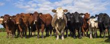 Πρόσκληση δήλωσης στοιχείων ζωικού κεφαλαίου των κτηνοτρόφων για το έτος 2015