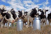 Κατανομή ποσοστώσεων αγελαδινού γάλακτος