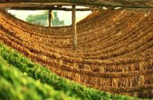Πληρωμή των δράσεων 1.4 «Αμειψισπορά με ξηρικές καλλιέργειες σε καπνοπαραγωγικές περιοχές» και 2.3 «Σύστημα Ολοκληρωμένης Διαχείρισης στην παραγωγή του καπνού» του Μέτρου 2.1.4 του  Π.Α.Α.  2007-2013, για το έτος 2013 Π.Ε. Σερρών